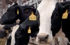 shared savings dairy vimeo poster